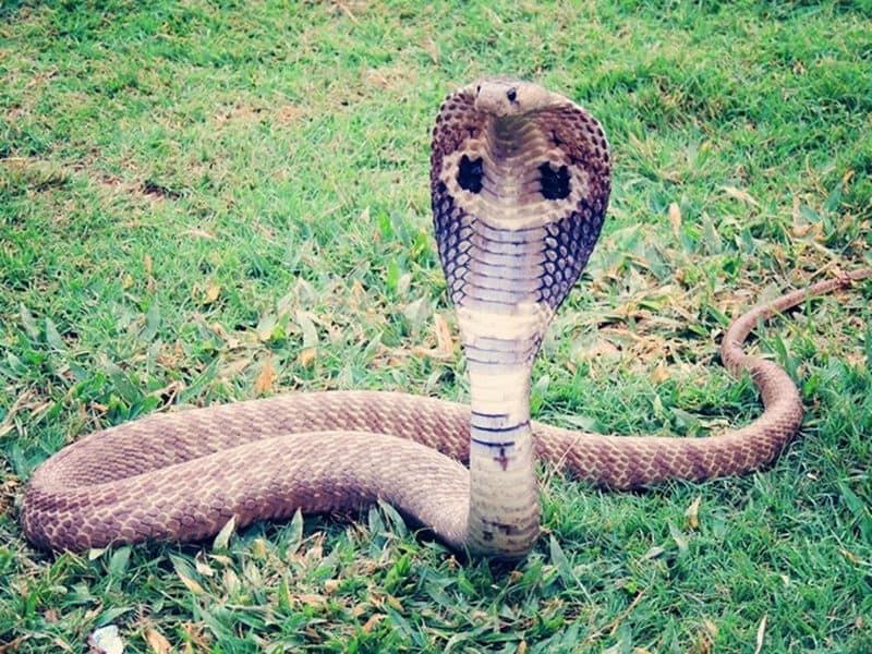 Mơ thấy rắn đánh con gì? Giải mã giấc mơ thấy rắn hot nhất với W88