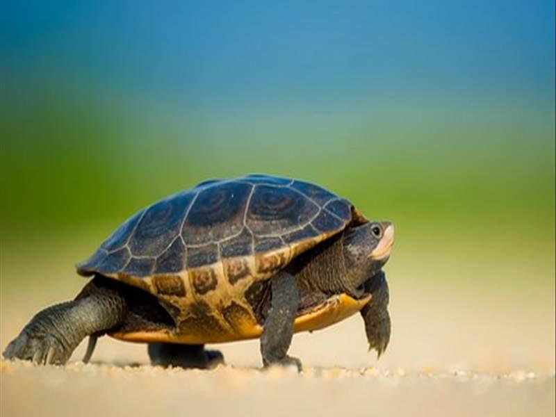 Nằm mơ thấy RÙA đánh số mấy? Giải mộng giấc mơ về rùa