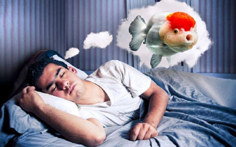 Nằm mơ thấy cá là điềm gì? Đánh số mấy là chuẩn xác nhất [NEW]