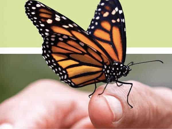 Nằm mơ thấy côn trùng SÂU BỌ trên người đánh số mấy?