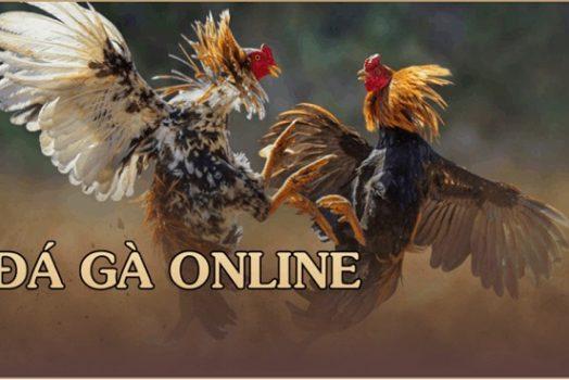 Hướng dẫn cá cược đá gà online tại w88 và kinh nghiệm chơi đá gà hay
