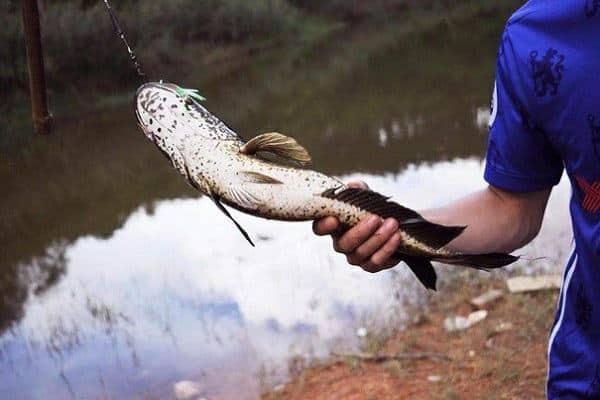 Mơ đi bắt cá đánh con gì? Báo hiệu điều gì?