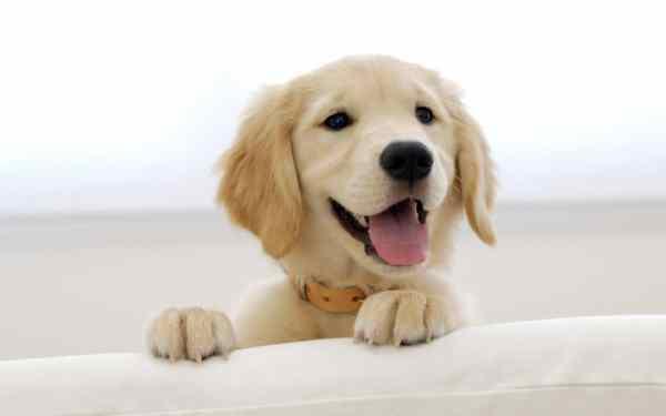 Nằm mơ thấy chó đuổi đánh con gì? báo hiệu điềm gì?